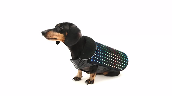Turn your dog into a disco ball with this light up vest