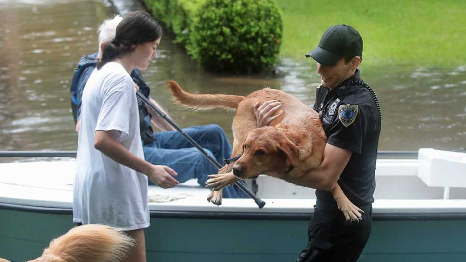 Volunteers and officers rescue residents and their dogs from flooding from Hurricane Harvey in Houston, Texas.